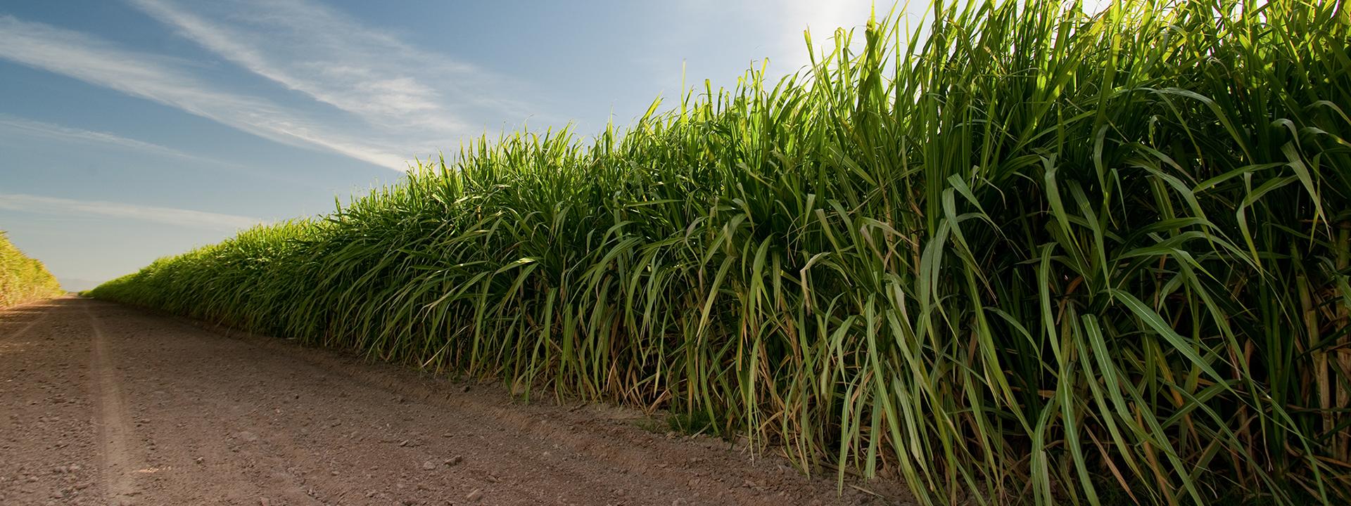 Sugar Cane Irrigation Solutions